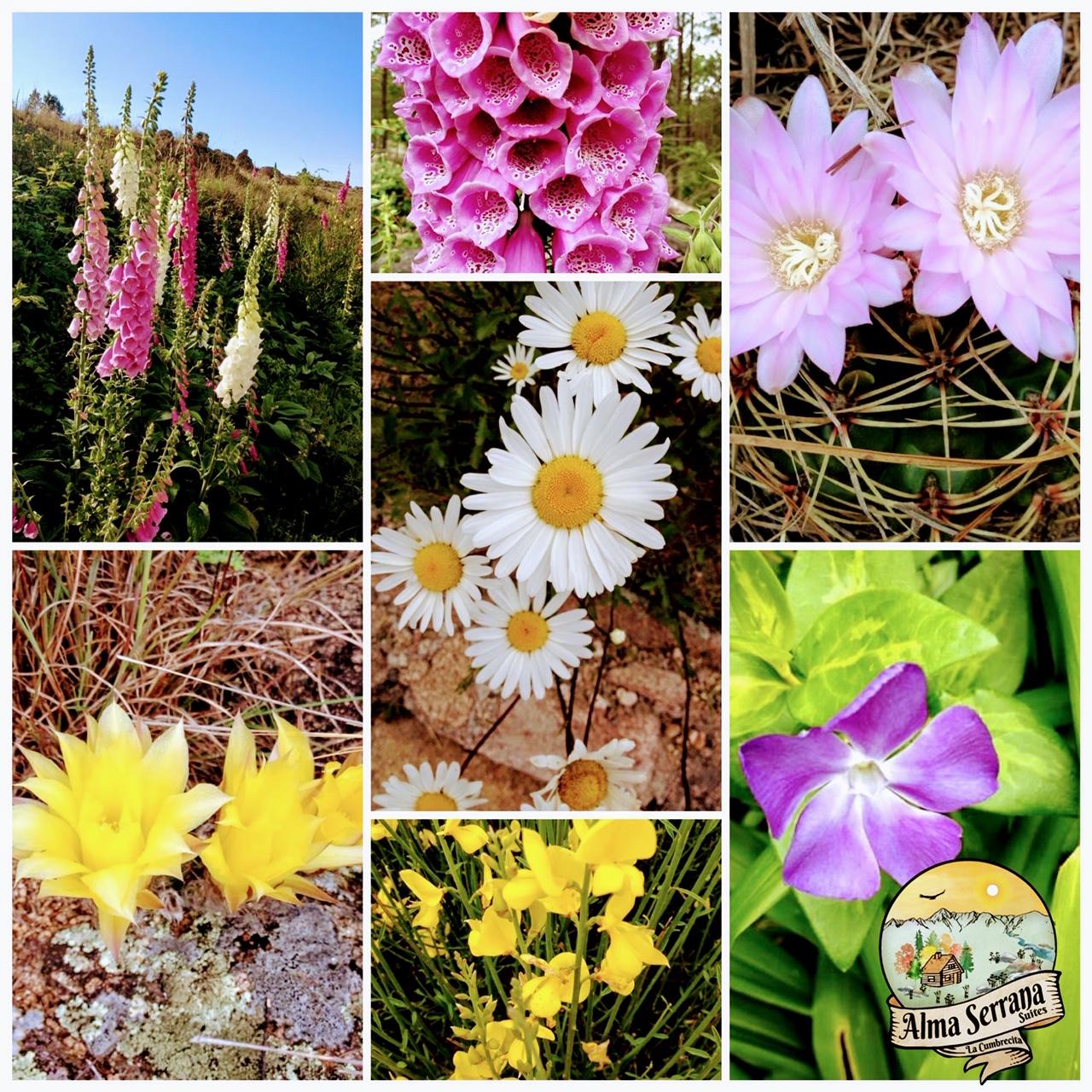 La Cumbrecita: su Flora y Fauna