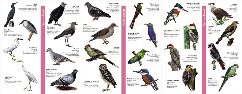 Alma Serrana en La cumbrecita, Cordoba: Un lugar de super lujo para los amantes de las aves.