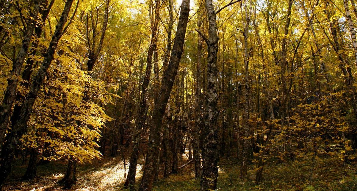 Que hacer en La Cumbrecita? Te gusta Caminar y recorrer senderos ? Foto 1